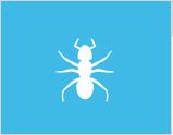 红火蚁防治